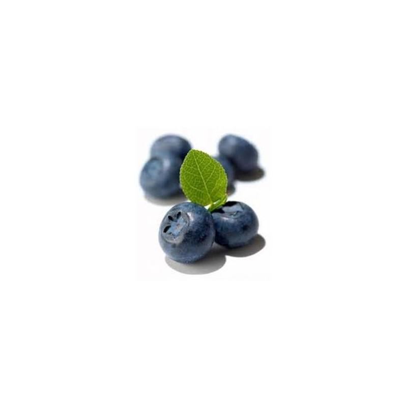 Mirtillo Gigante BRIGITTA BLUE