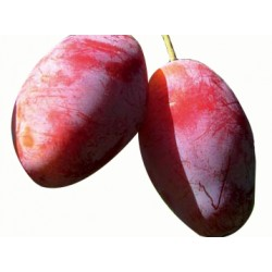 Susino Zucchella