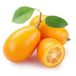 Kumquat (mandarino cinese)