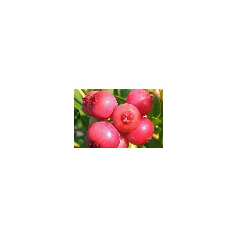 Mirtillo Rosa Pink Lemonade