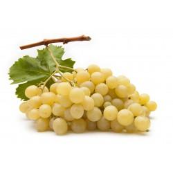 Uva Moscato Bianco